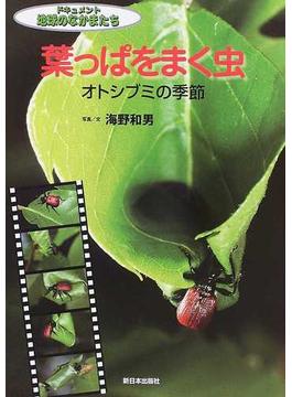 葉っぱをまく虫 オトシブミの季節