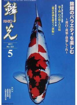 鱗光 2011−5 錦鯉のバラエティを楽しむ〜黄白・黄葉・落葉しぐれ〜