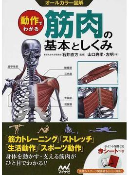 動作でわかる筋肉の基本としくみ オールカラー図解