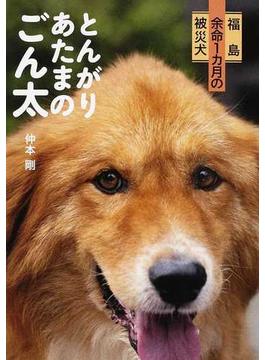 とんがりあたまのごん太 福島余命1カ月の被災犬