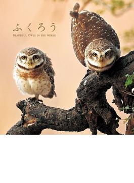 ふくろう BEAUTIFUL OWLS IN THE WORLD