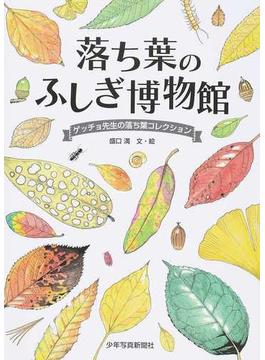 落ち葉のふしぎ博物館 ゲッチョ先生の落ち葉コレクション