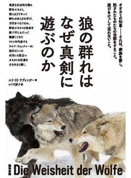 狼の群れはなぜ真剣に遊ぶのか