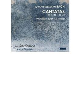 Cantata, 33, 103, 146, : Ponseele / Il Gardellino Weynants Guillon Etc