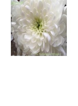 Hydrangeas Whisper