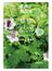 植物ふしぎウオッチング 飯縄山登山道 2