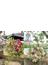 パリの花束