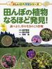 田んぼの植物なるほど発見! 調べよう、草の生きのこり作戦