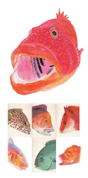 QAB琉球朝日放送「熱血!つり塾」 山城淳塾長「海族・沖縄の海魚」海塩筆画展