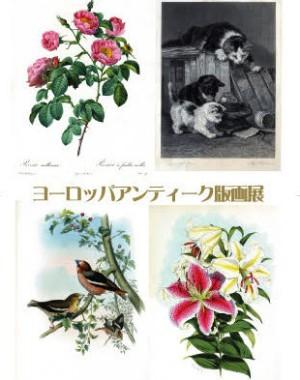 ヨーロッパアンティーク版画展  ~ボタニカルアートから西洋古典版画まで~
