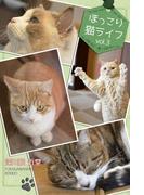 ほっこり猫ライフ vol.3