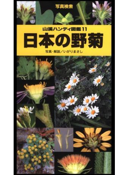 ヤマケイハンディ図鑑11 日本の野菊(山溪ハンディ図鑑)